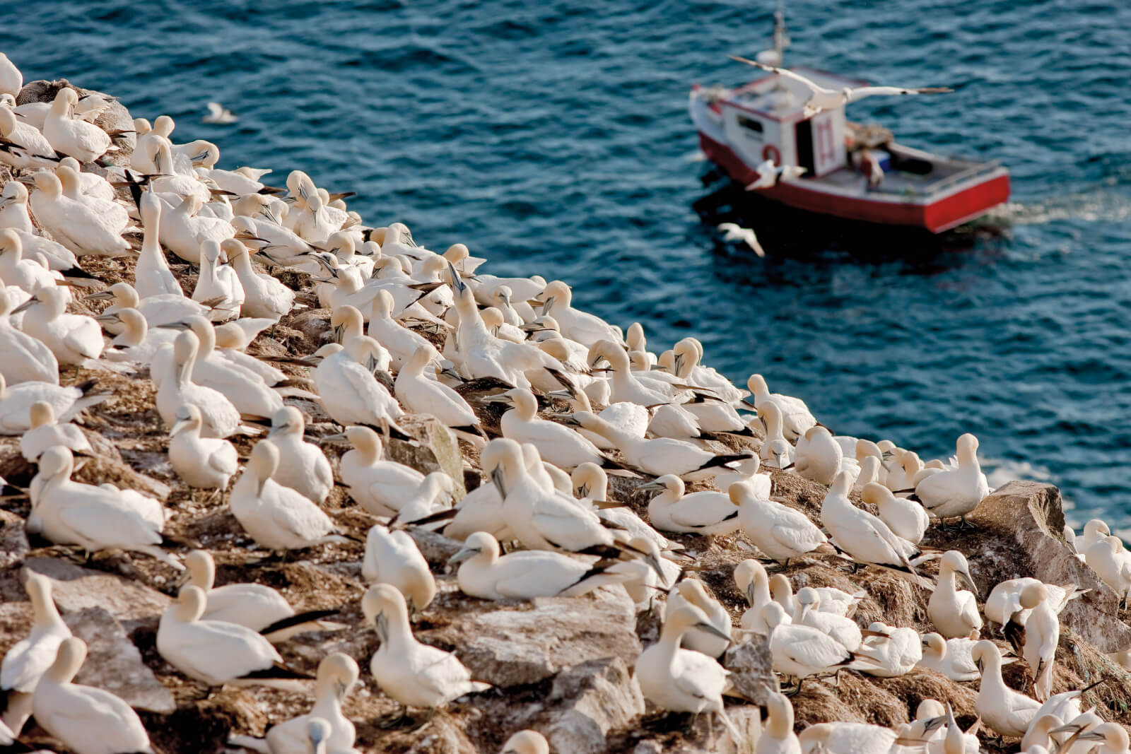 The Seabird Capital of North America - image