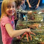 Children play with starfish in touch tank