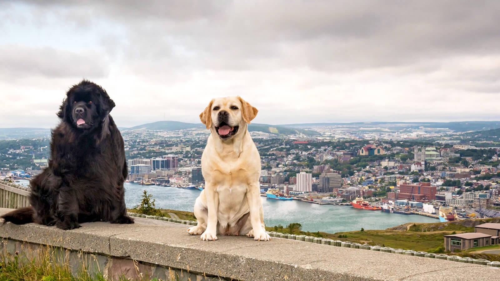 Pet Friendly Hotels in St. John's - image