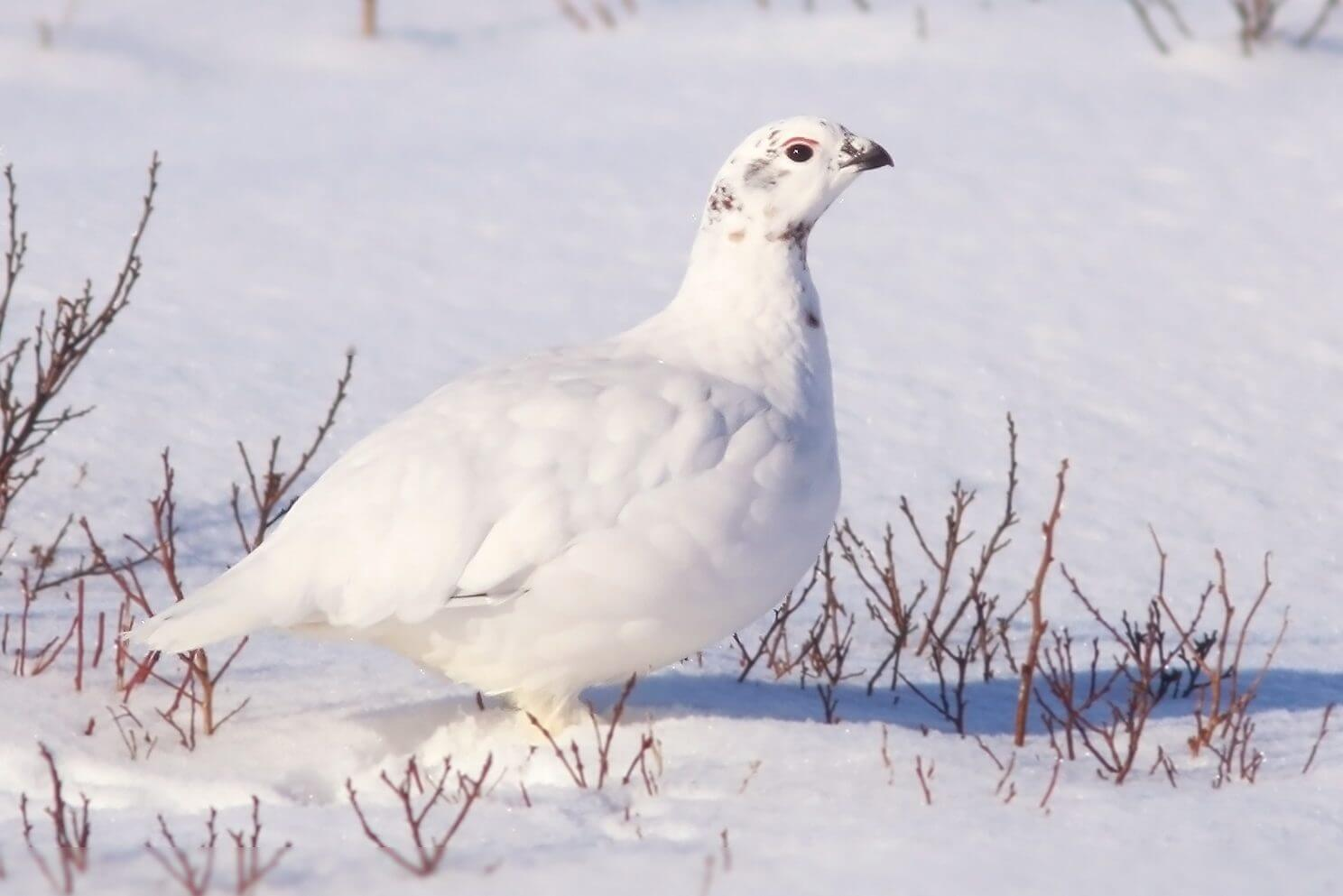 The Big 5 Birds to Spot this Winter - image