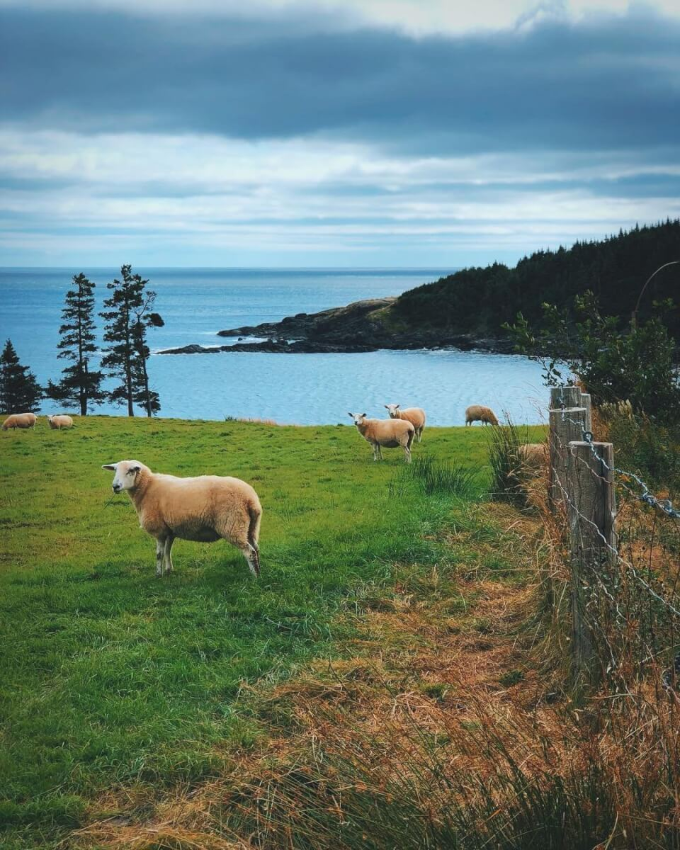 Newfoundland's Irish Connections - image