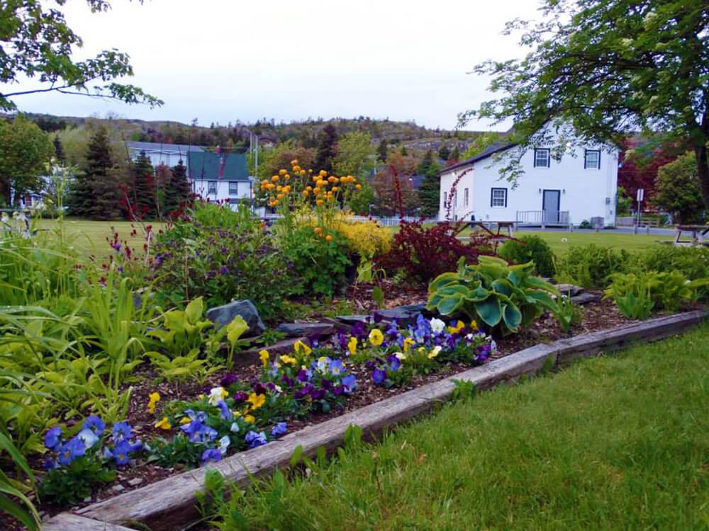 Wilcox Gardens in Brigus