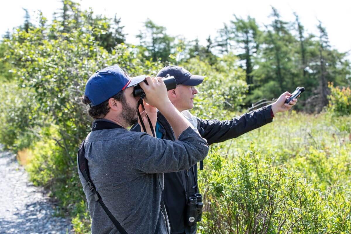 Bird Watching Sites to Visit Around St. John's - image