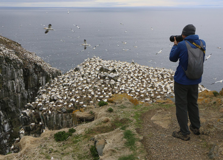 Five Summer Birds to See around St. John's & the Avalon Peninsula - image